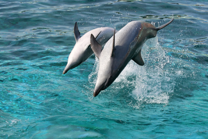 Dolphin Encounters Package (Shallow Water Experience)